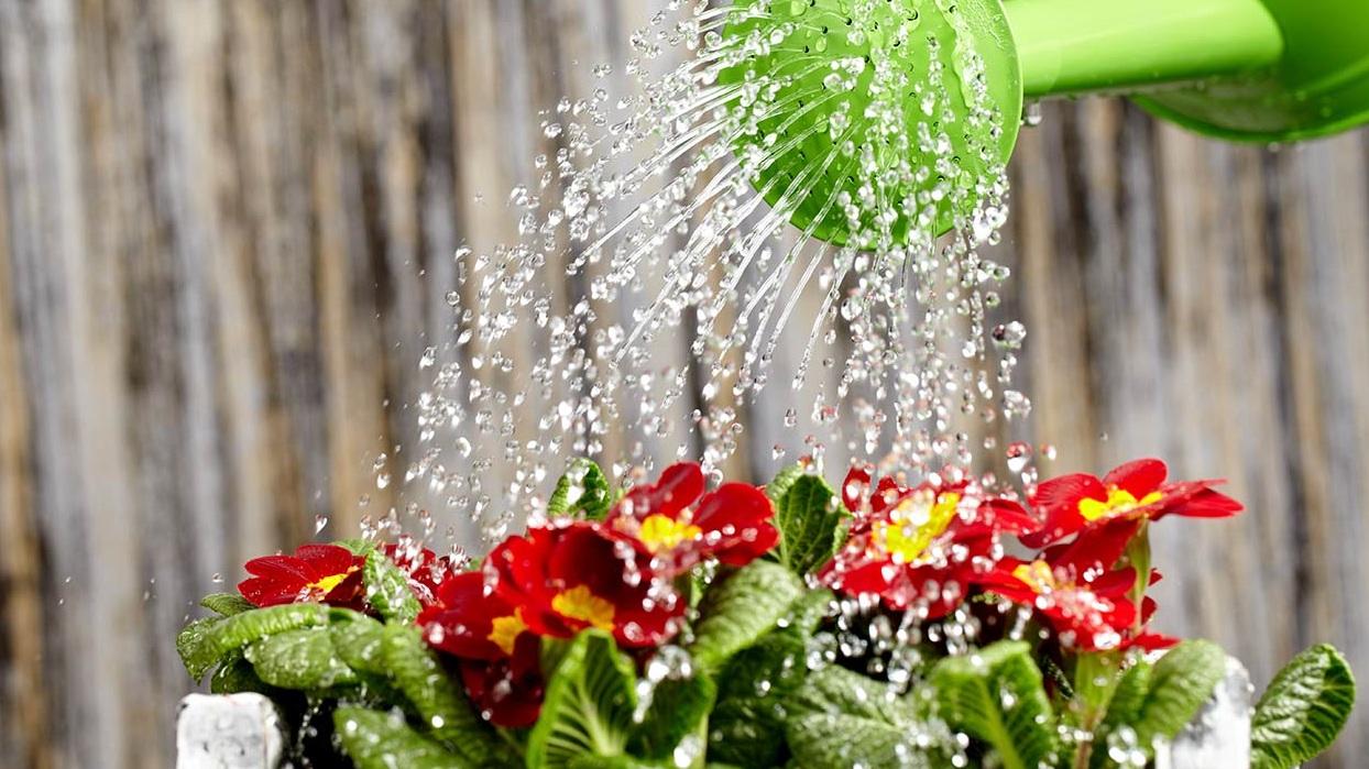 როგორ მოვრწყათ მცენარეები ზამთრის ზესონზე?