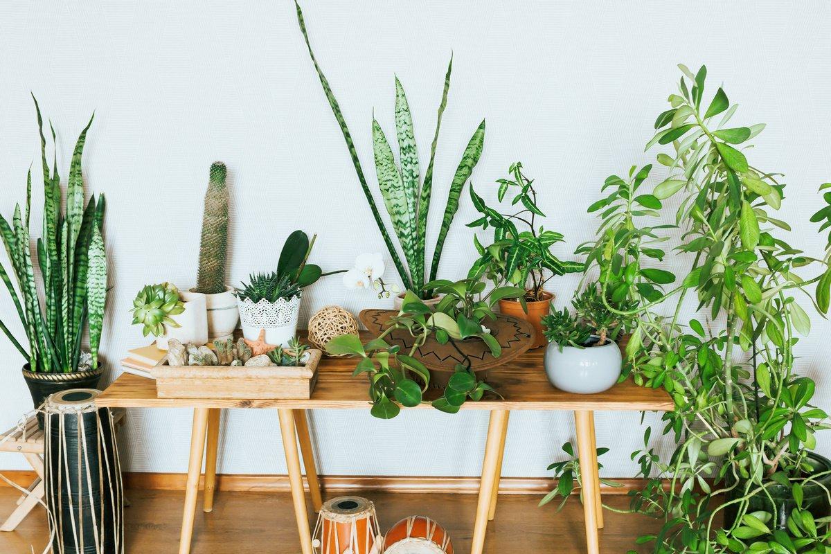 მცენარეები ალერგიულებისათვის
