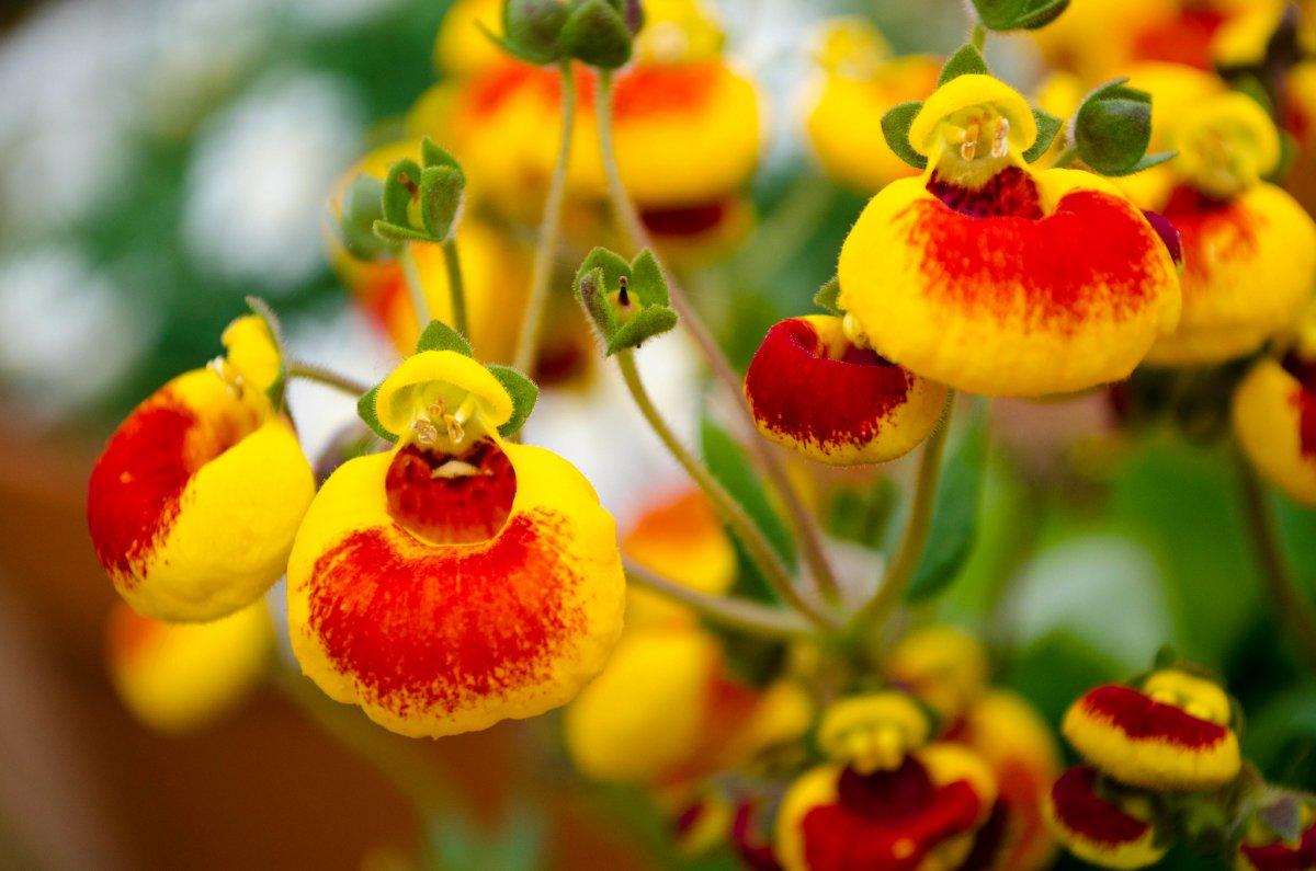 მცენარეები რომლებიც არ ყვავილობს გრილი გამოზამთრების გარეშე