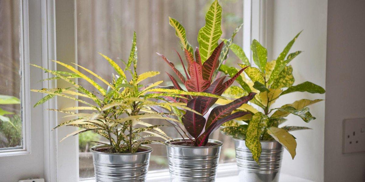 მაკროელემენტები,მცენარეების განვითარებისათვის (ნაწილი 1)