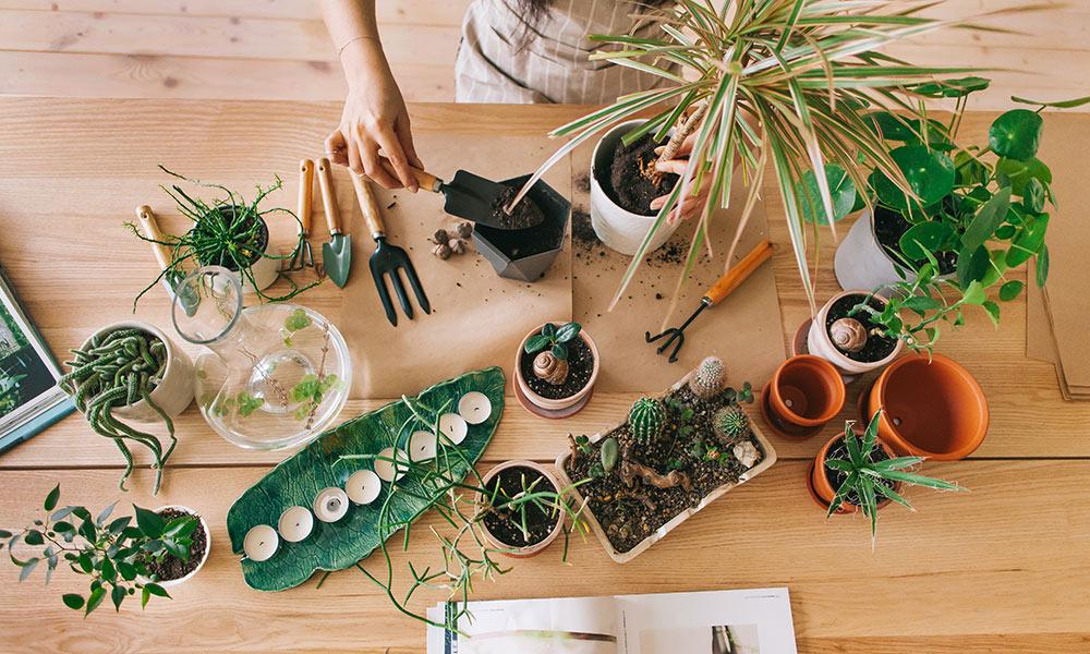 ოთახის გამწვანება,საიდან და როგორ დავიწყოთ
